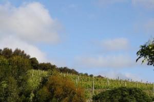 Rudderless Vineyards
