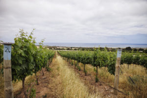 Rudderless Vineyard